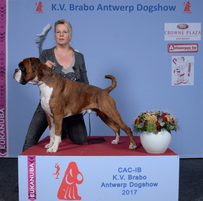 Brabo Dogshow